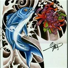 时尚的半胛锦鲤鱼纹身手稿图片