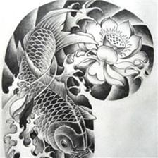 好看的半胛锦鲤鱼纹身手稿图片