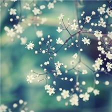 精选唯美森系治愈系花朵图片