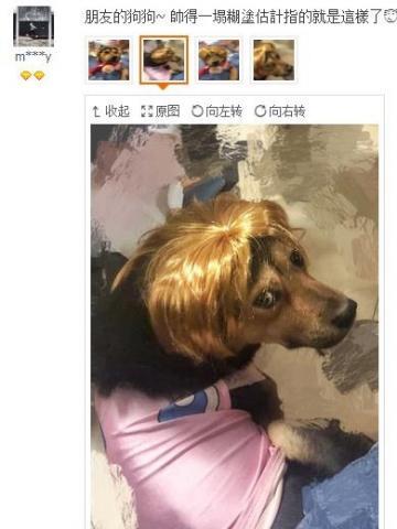 朋友的狗狗帅得一塌糊涂估计指的就是这样了