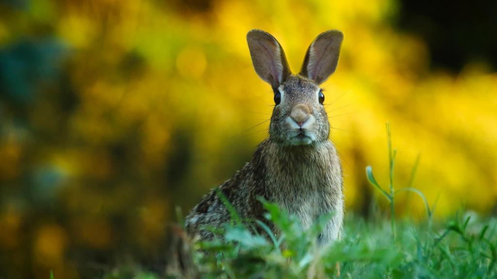 软萌可爱的淘气小兔子